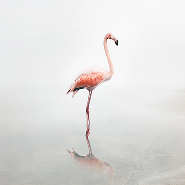flamingo artwork