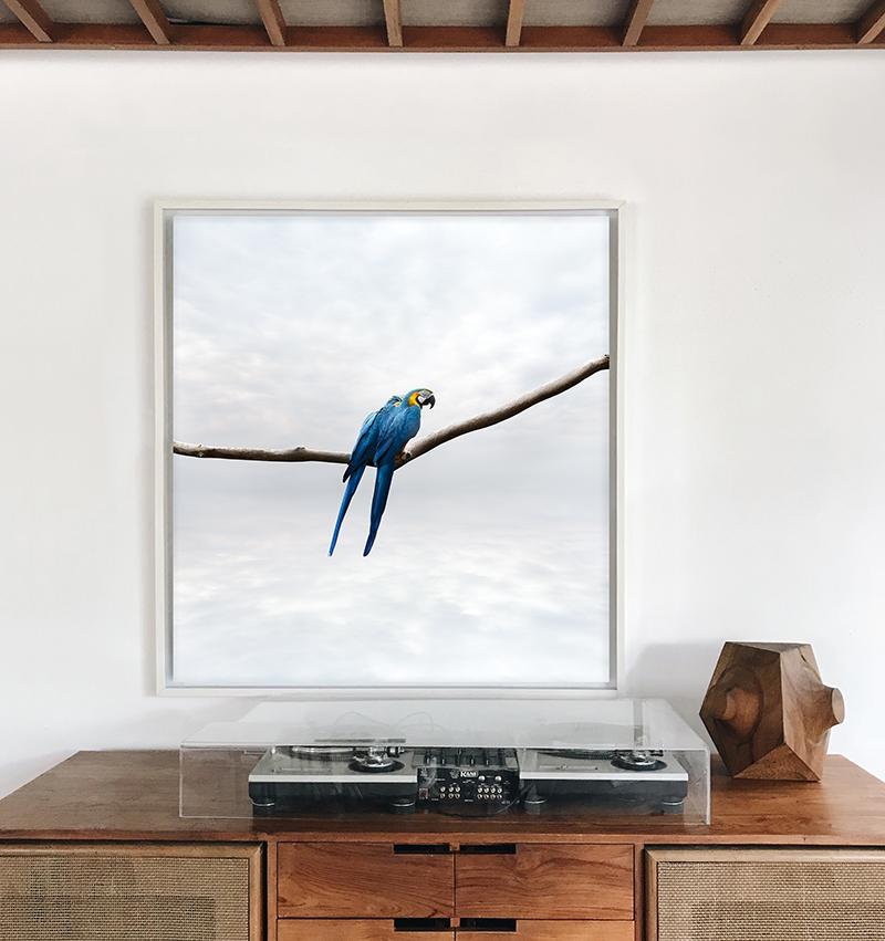 parrot art photography