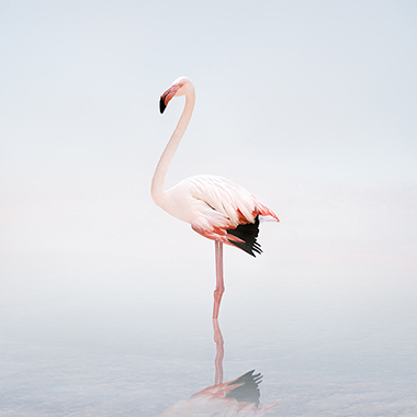 flamingo art photography