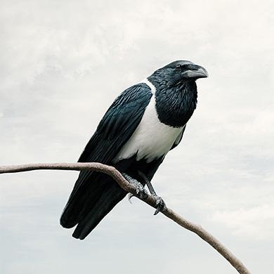 bird photography art